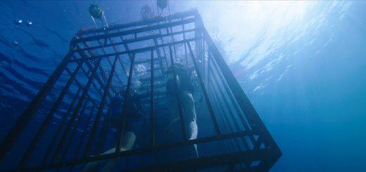 47 metri trailer film